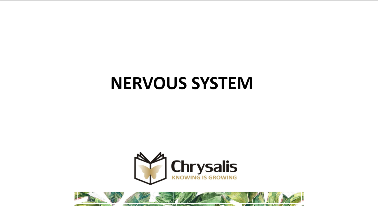 nervous-system-powerpoint